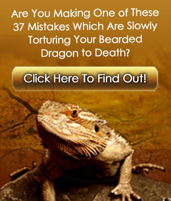 What Substrate Is Best For A Bearded Dragon Natural Sunlight